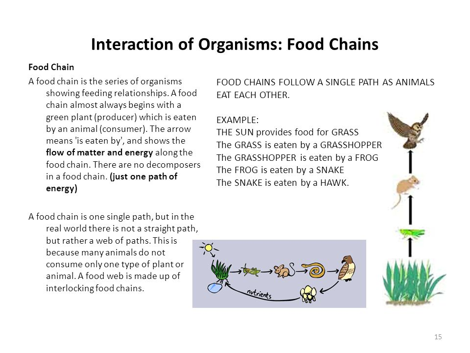 Interaction of Organisms: Food Chains Food Chain A food chain is the series of organisms showing feeding relationships.