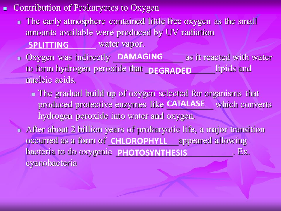 Contribution of Prokaryotes to Oxygen Contribution of Prokaryotes to Oxygen The early atmosphere contained little free oxygen as the small amounts available were produced by UV radiation _______________ water vapor.
