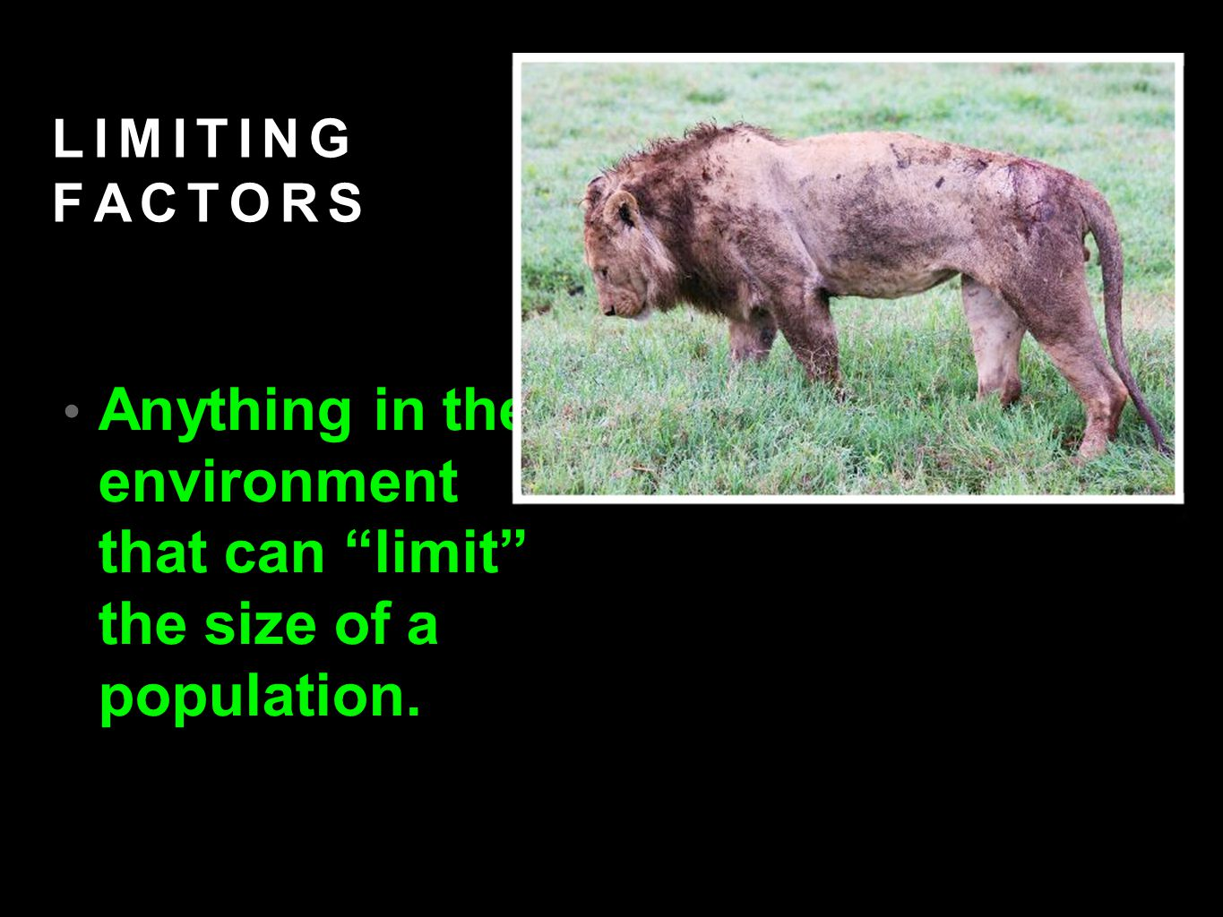 LIMITING FACTORS Anything in the environment that can limit the size of a population.
