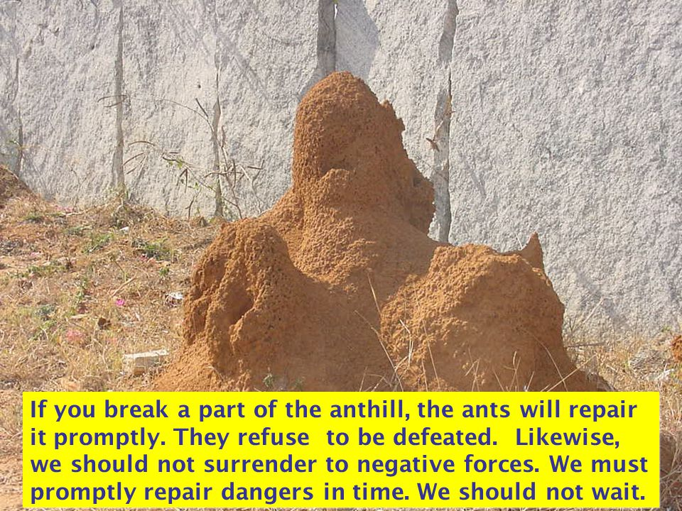 If you break a part of the anthill, the ants will repair it promptly.