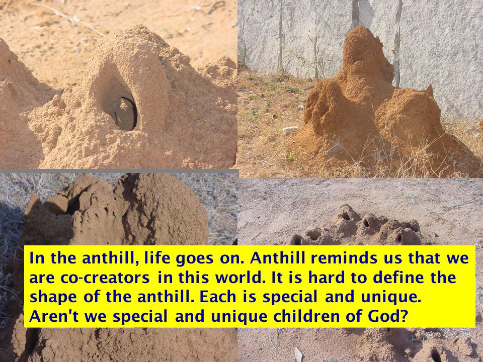 In the anthill, life goes on. Anthill reminds us that we are co-creators in this world.