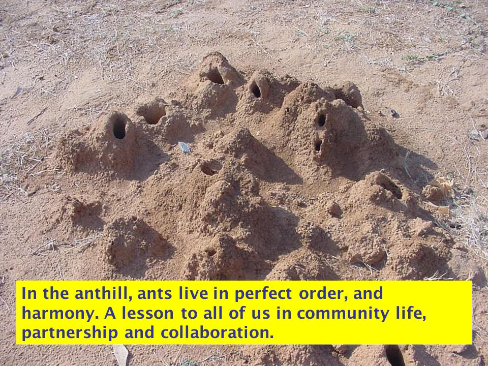 In the anthill, ants live in perfect order, and harmony. A lesson to all of us in community life, partnership and collaboration.