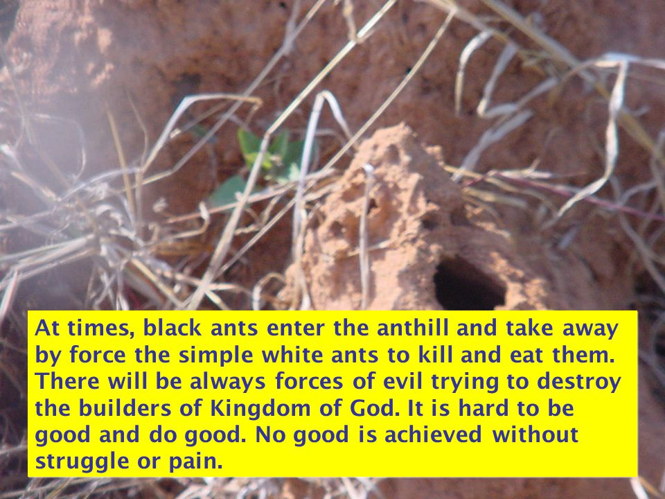 At times, black ants enter the anthill and take away by force the simple white ants to kill and eat them. There will be always forces of evil trying t