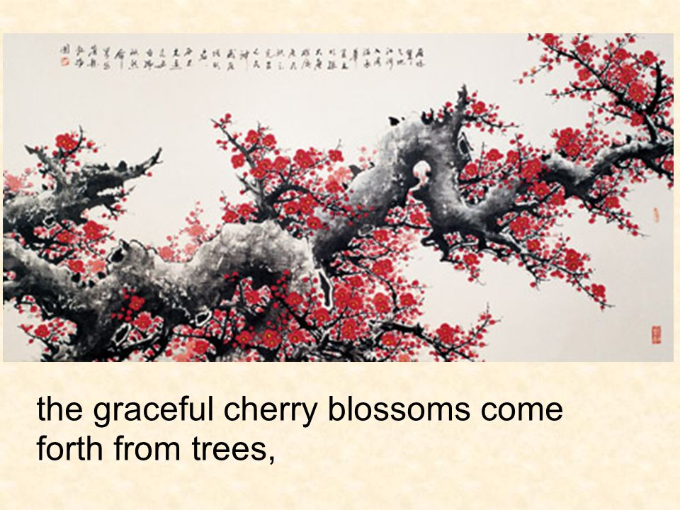 the graceful cherry blossoms come forth from trees,