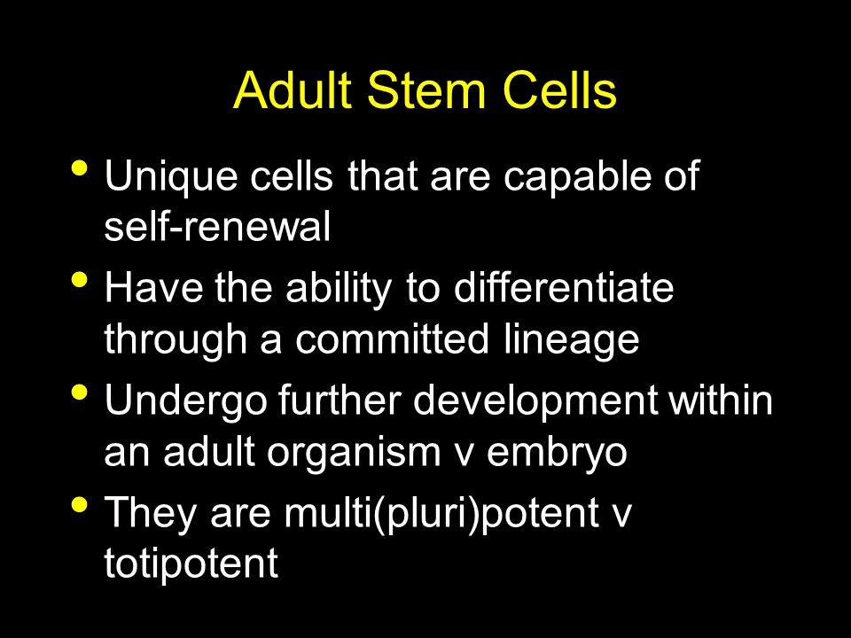 Adult Stem Cells Unique cells that are capable of self-renewal Have the ability to differentiate through a committed lineage Undergo further developme