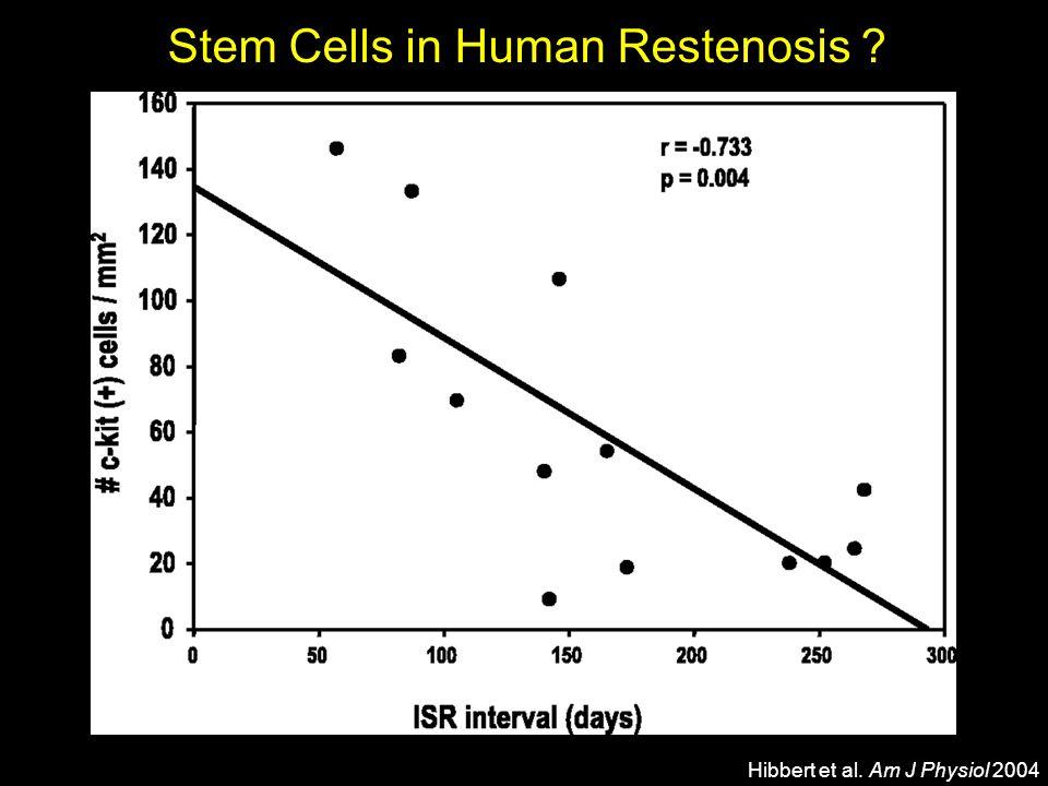 Stem Cells in Human Restenosis ? smc-actin c-kit+ Hibbert et al. Am J Physiol 2004