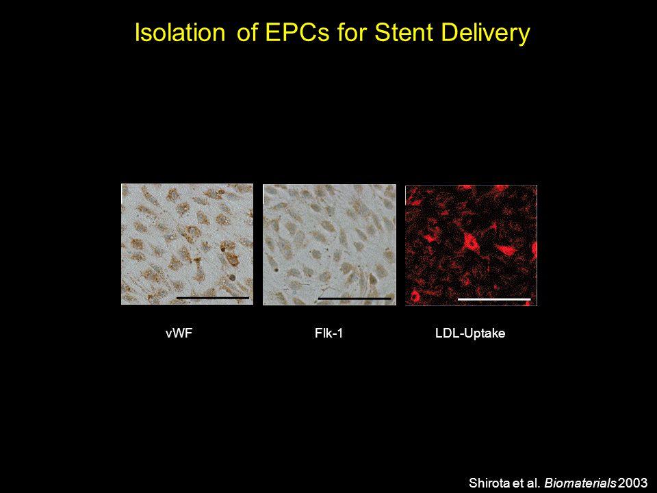 Shirota et al. Biomaterials 2003 vWFFlk-1LDL-Uptake Isolation of EPCs for Stent Delivery