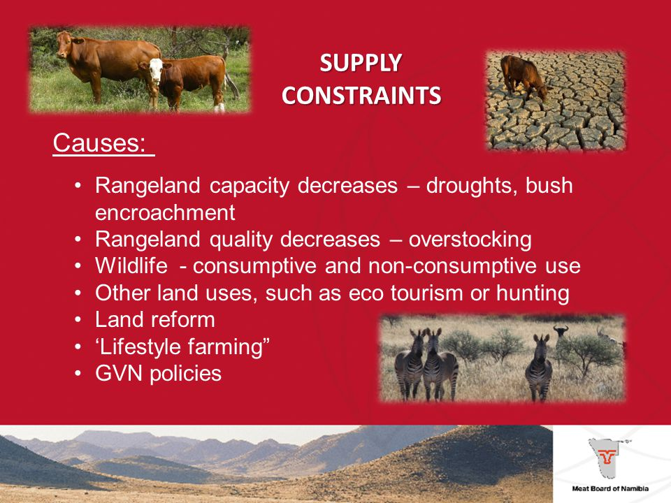SUPPLY CONSTRAINTS Solutions: Implementation of National Rangeland Strategy Commitment from GVN and other institutions Training and education Research Local value addition Multispecies systems Improved production