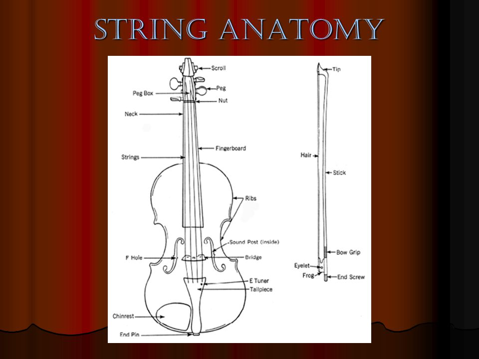 String Facts All of the string family instruments are made of wood All of the string family instruments are made of wood Their sizes are what makes them sound different Their sizes are what makes them sound different Highest to lowest pitched strings Highest to lowest pitched strings Violin Violin Viola Viola Cello Cello Bass Bass Strings are made of gut, steel, or nylon Strings are made of gut, steel, or nylon Strings can be bowed with a bow or plucked with the fingers Strings can be bowed with a bow or plucked with the fingers