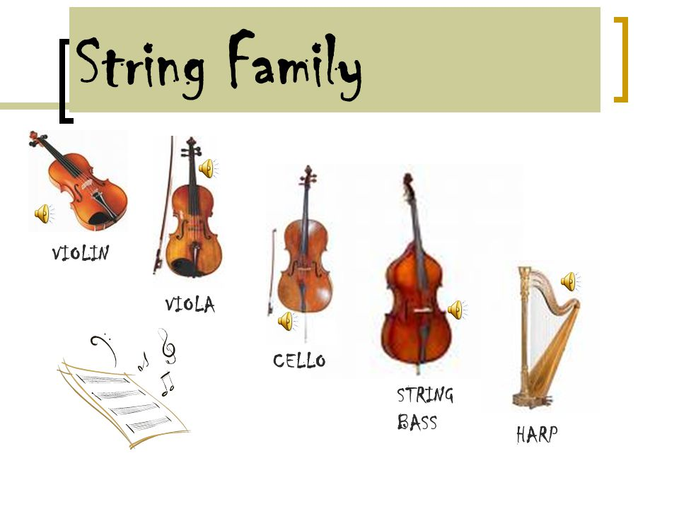String Family The String family is the largest family in actual numbers.