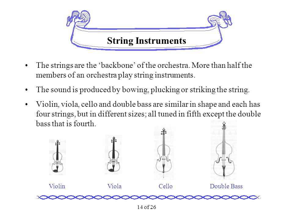 14 of 26 String Instruments The strings are the 'backbone' of the orchestra. More than half the members of an orchestra play string instruments. The s