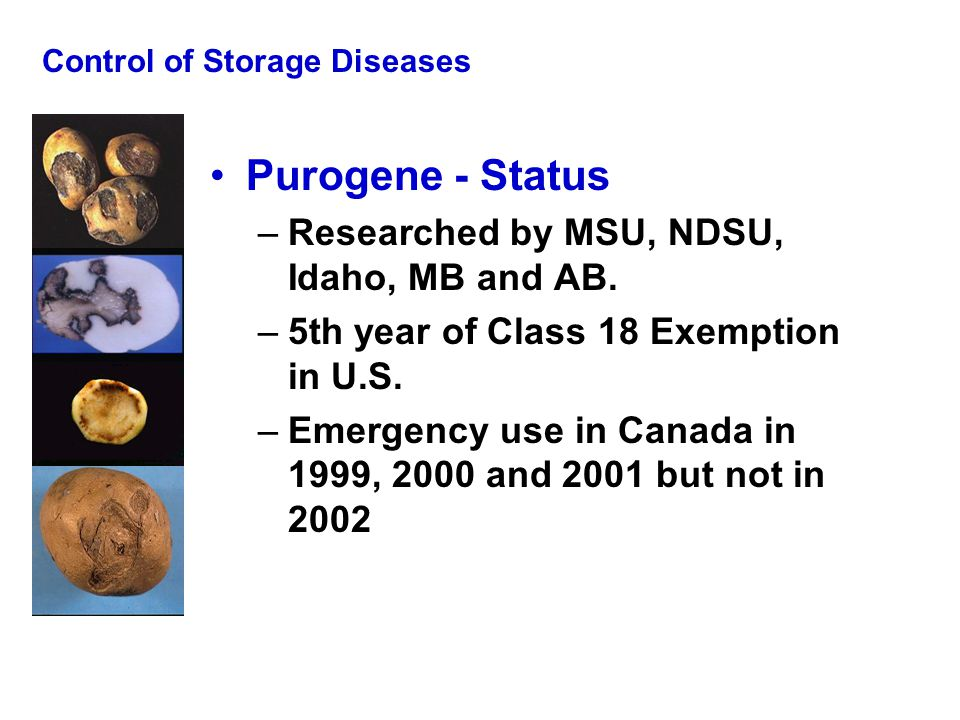 Control of Storage Diseases Purogene - Status –Researched by MSU, NDSU, Idaho, MB and AB. –5th year of Class 18 Exemption in U.S. –Emergency use in Ca