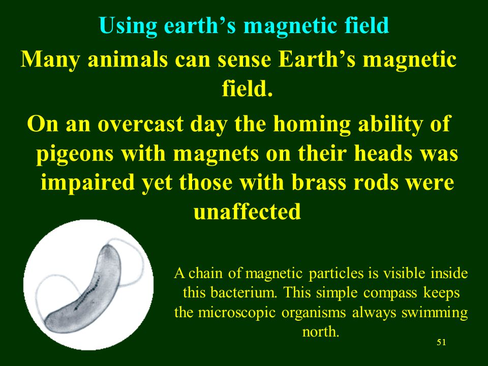 51 Using earth's magnetic field Many animals can sense Earth's magnetic field.