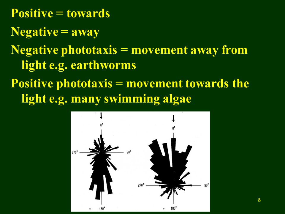 8 Positive = towards Negative = away Negative phototaxis = movement away from light e.g.