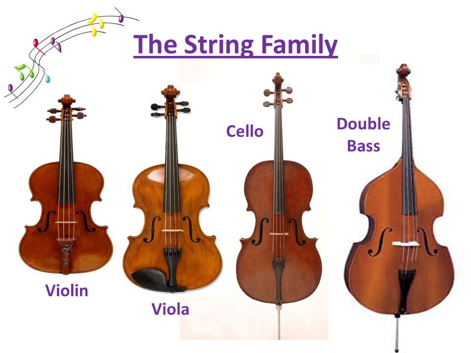 The String Family Violin Double Bass Cello Viola