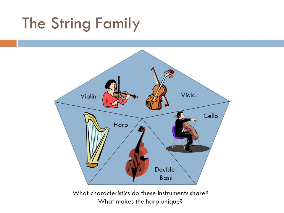 The String Family What characteristics do these instruments share? What makes the harp unique? Violin Viola Harp Double Bass Cello