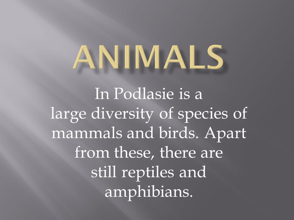 In Podlasie is a large diversity of species of mammals and birds. Apart from these, there are still reptiles and amphibians.