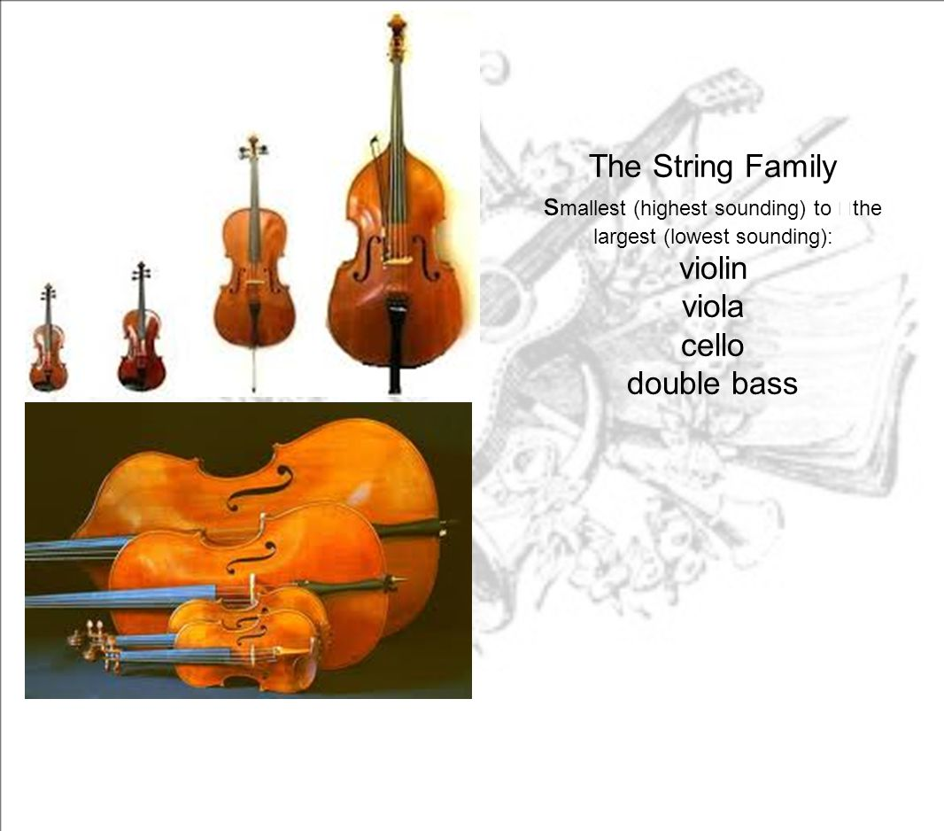 The String Family s mallest (highest sounding) to the largest (lowest sounding): violin viola cello double bass
