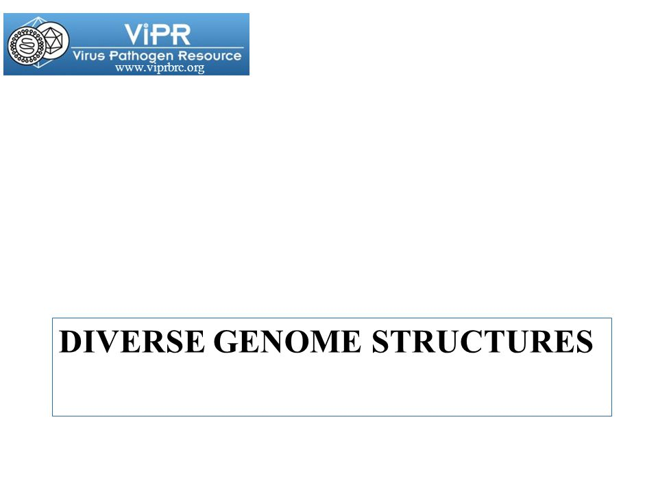 www.viprbrc.org DIVERSE GENOME STRUCTURES