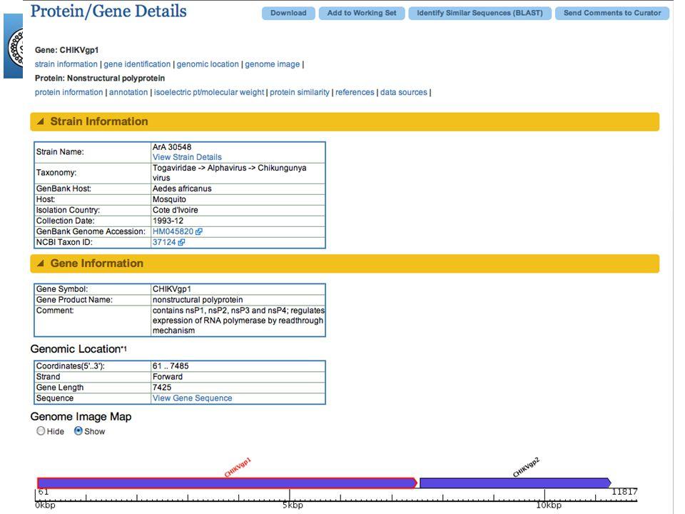 www.viprbrc.org Single Strand RNA Virus Genome