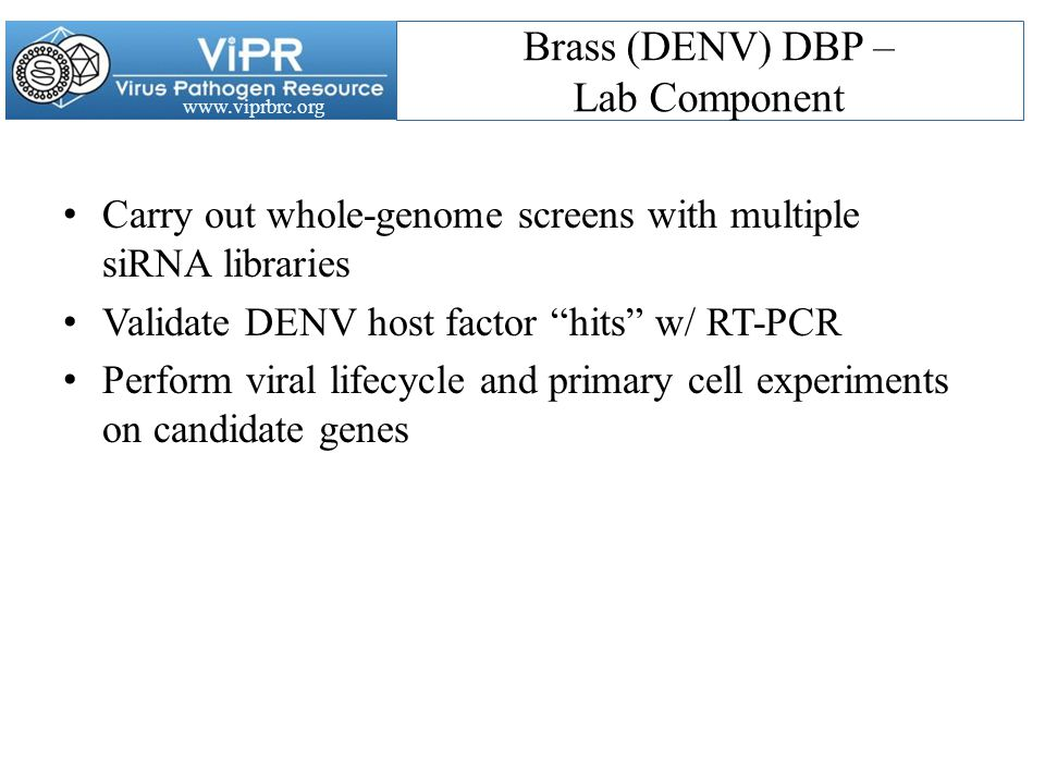 www.viprbrc.org Brass (DENV) DBP – Lab Component Carry out whole-genome screens with multiple siRNA libraries Validate DENV host factor hits w/ RT-PCR Perform viral lifecycle and primary cell experiments on candidate genes