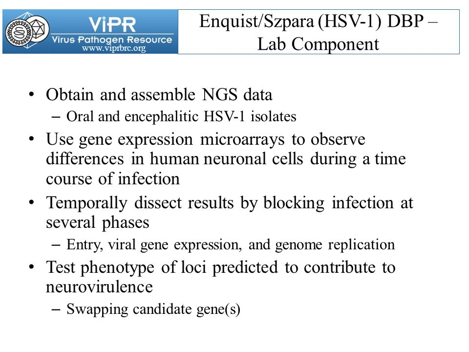 www.viprbrc.org Enquist/Szpara (HSV-1) DBP – Lab Component Obtain and assemble NGS data – Oral and encephalitic HSV-1 isolates Use gene expression microarrays to observe differences in human neuronal cells during a time course of infection Temporally dissect results by blocking infection at several phases – Entry, viral gene expression, and genome replication Test phenotype of loci predicted to contribute to neurovirulence – Swapping candidate gene(s)