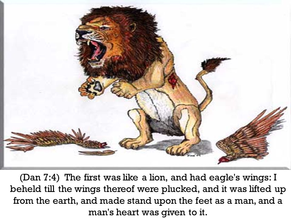 (Dan 7:4) The first was like a lion, and had eagle s wings: I beheld till the wings thereof were plucked, and it was lifted up from the earth, and made stand upon the feet as a man, and a man s heart was given to it.