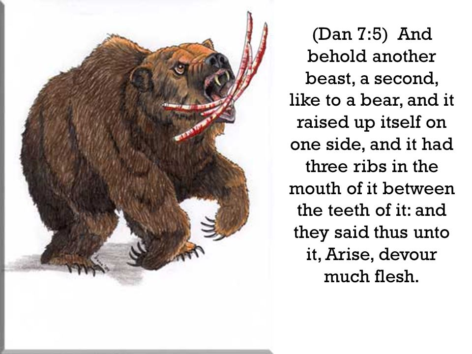 (Dan 7:5) And behold another beast, a second, like to a bear, and it raised up itself on one side, and it had three ribs in the mouth of it between th