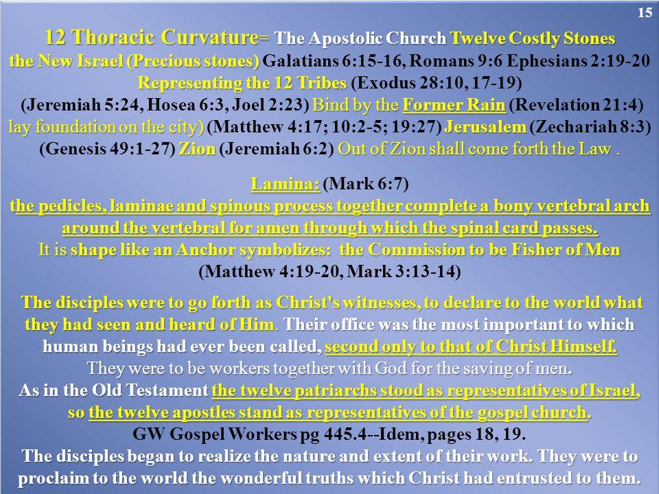 12 Thoracic Curvature = The Apostolic Church Twelve Costly Stones the New Israel (Precious stones) the New Israel (Precious stones) Galatians 6:15-16,