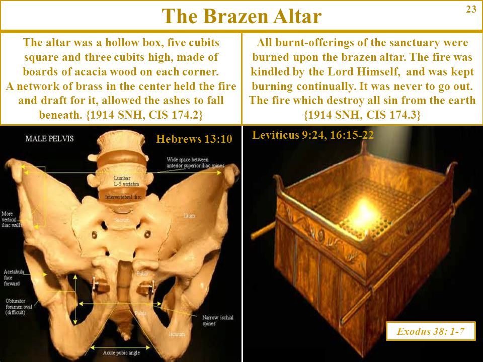 23 Exodus 38: 1-7 The altar was a hollow box, five cubits square and three cubits high, made of boards of acacia wood on each corner. A network of bra