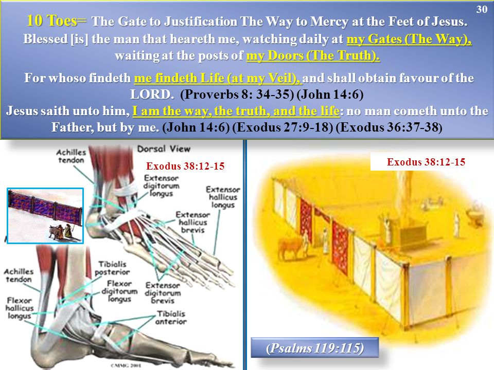 30 ( Psalms 119:115) Exodus 38:12-15 10 Toes= The Gate to Justification The Way to Mercy at the Feet of Jesus. Blessed [is] the man that heareth me, w