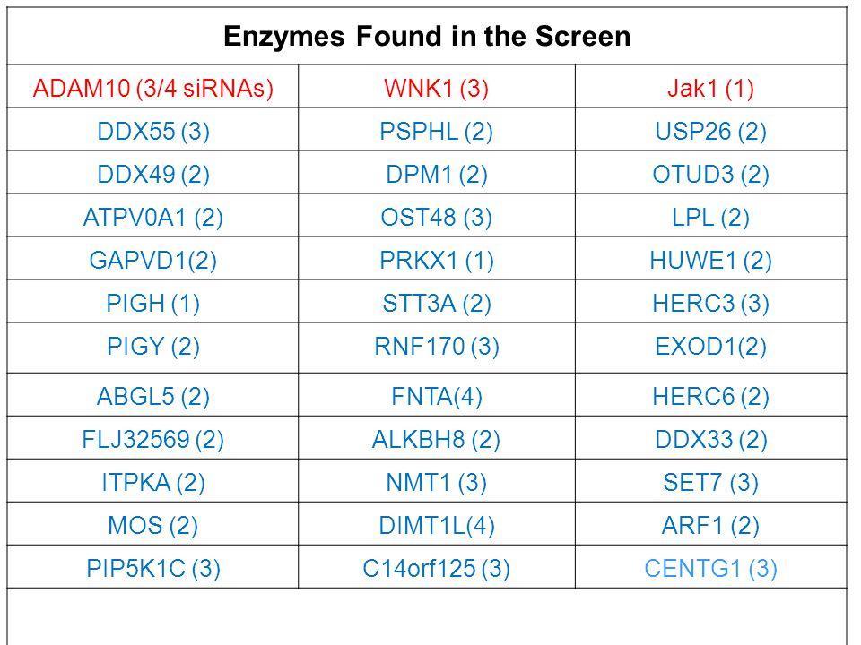 Enzymes Found in the Screen ADAM10 (3/4 siRNAs)WNK1 (3)Jak1 (1) DDX55 (3)PSPHL (2)USP26 (2) DDX49 (2)DPM1 (2)OTUD3 (2) ATPV0A1 (2)OST48 (3)LPL (2) GAPVD1(2)PRKX1 (1)HUWE1 (2) PIGH (1)STT3A (2)HERC3 (3) PIGY (2)RNF170 (3)EXOD1(2) ABGL5 (2)FNTA(4)HERC6 (2) FLJ32569 (2)ALKBH8 (2)DDX33 (2) ITPKA (2)NMT1 (3)SET7 (3) MOS (2)DIMT1L(4)ARF1 (2) PIP5K1C (3)C14orf125 (3)CENTG1 (3)
