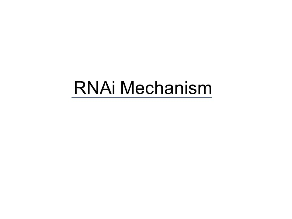RNAi Mechanism