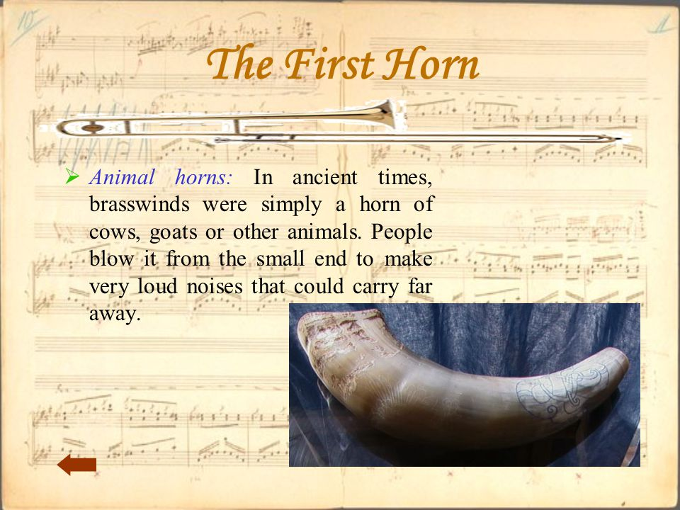 The First Horn  Animal horns: In ancient times, brasswinds were simply a horn of cows, goats or other animals.