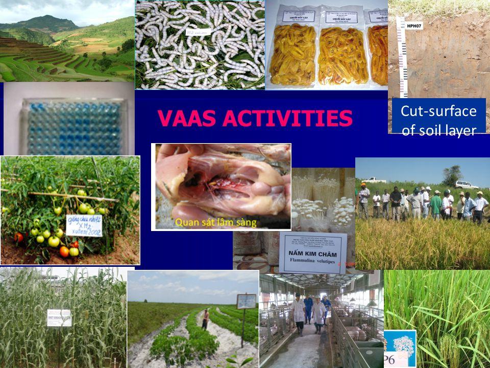 Cut-surface of soil layer Test ELISA VAAS ACTIVITIES