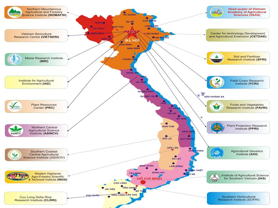 33 11 Providing comprehensive vision, strategic direction and oversight of R&D programs 22 Conducting basic and applied research and technology transfer Post-graduate and human resource training www.vaas.org.vn RESPONSIBILITY Bèo chuyển gen