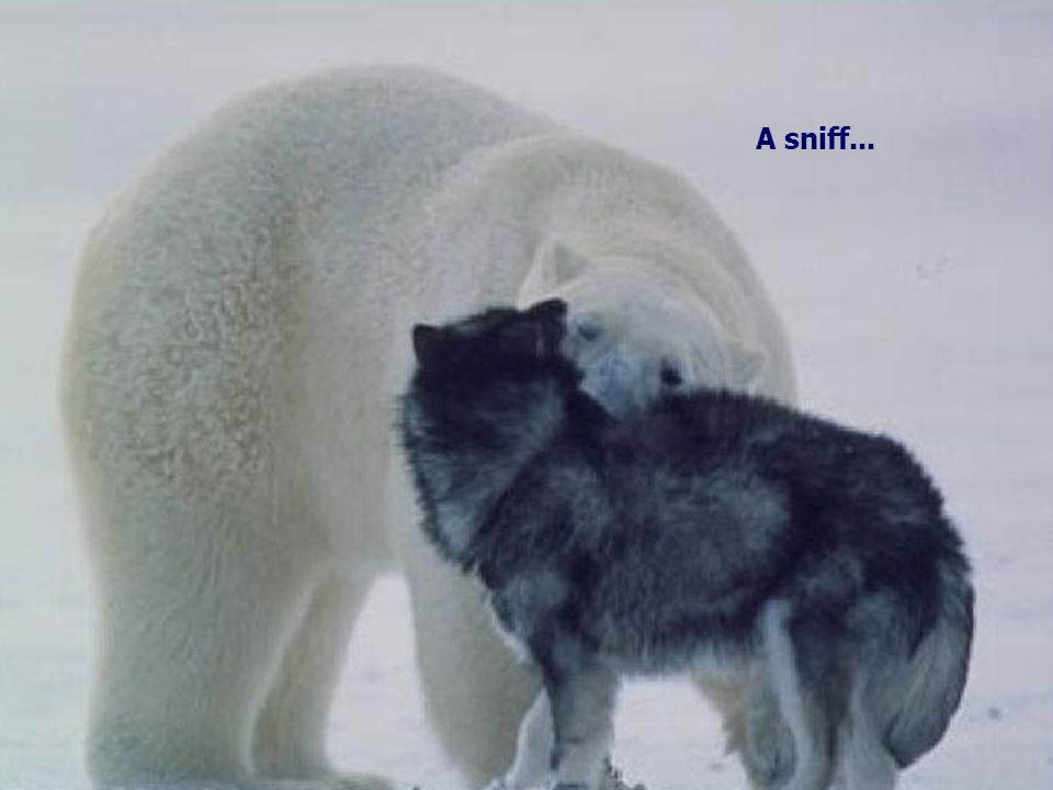 A sniff...
