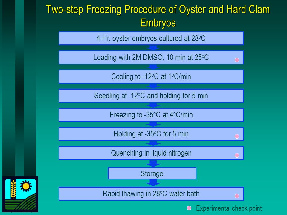 Two-step Freezing Procedure of Oyster and Hard Clam Embryos 4-Hr.