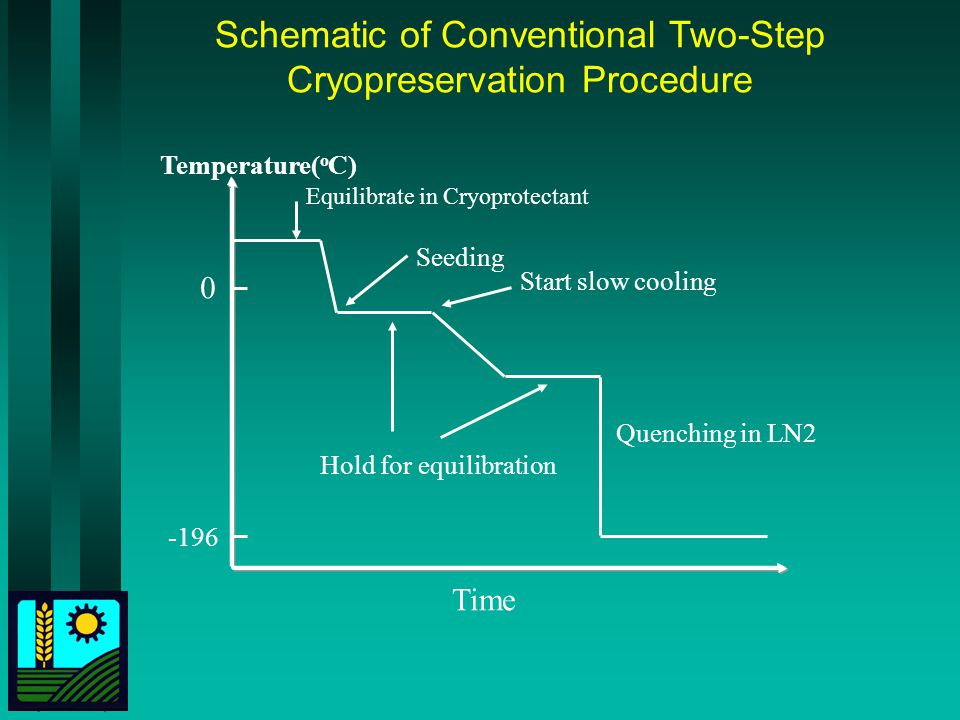 Schematic of Conventional Two-Step Cryopreservation Procedure Temperature( o C) Time 0 Equilibrate in Cryoprotectant Seeding Start slow cooling Hold for equilibration Quenching in LN2 -196
