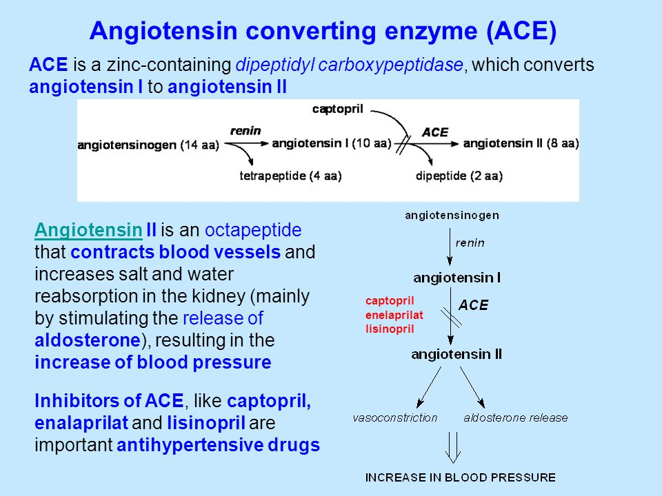 Angiotensin converting enzyme (ACE) ACE is a zinc-containing dipeptidyl carboxypeptidase, which converts angiotensin I to angiotensin II AngiotensinAngiotensin II is an octapeptide that contracts blood vessels and increases salt and water reabsorption in the kidney (mainly by stimulating the release of aldosterone), resulting in the increase of blood pressure Inhibitors of ACE, like captopril, enalaprilat and lisinopril are important antihypertensive drugs captopril enelaprilat lisinopril