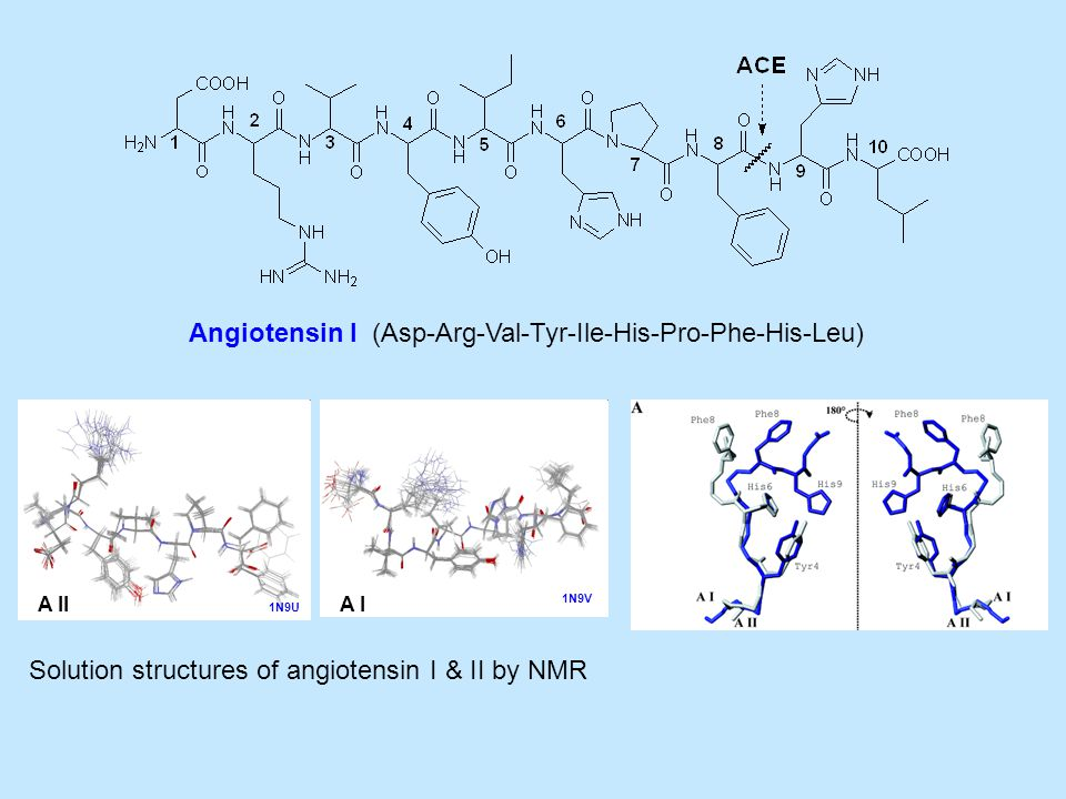 A II Angiotensin I (Asp-Arg-Val-Tyr-Ile-His-Pro-Phe-His-Leu) A I 1N9U 1N9V Solution structures of angiotensin I & II by NMR