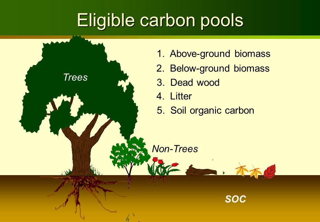 Trees Eligible carbon pools 1. Above-ground biomass 2. Below-ground biomass 3. Dead wood 4. Litter 5. Soil organic carbon Non-Trees SOC