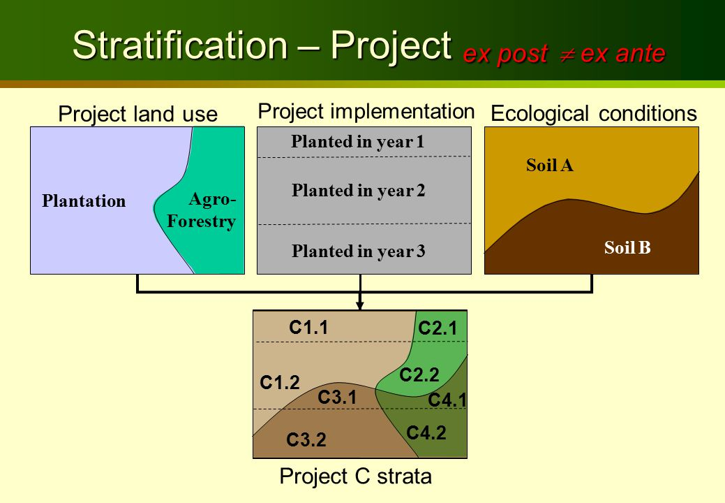 Project land use Ecological conditions Soil B Soil A Project C strata Plantation Agro- Forestry C1.1 C2.1 C3.2 C4.2 Stratification – Project ex post Stratification – Project ex post Project implementation Planted in year 1 Planted in year 2 Planted in year 3 C1.2 C2.2 C4.1 C3.1  ex ante