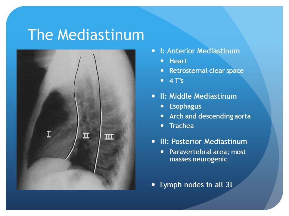 The Mediastinum I: Anterior Mediastinum Heart Retrosternal clear space 4 T's II: Middle Mediastinum Esophagus Arch and descending aorta Trachea III: P