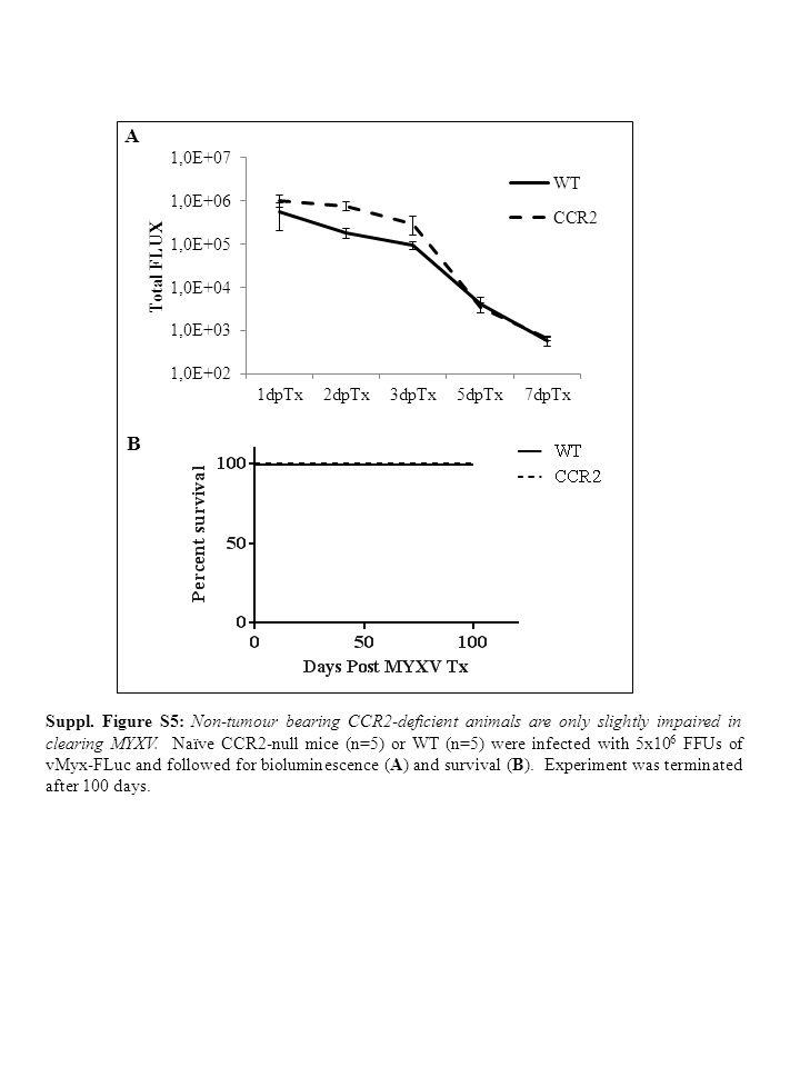 * * * * NK1.1 - CD3 + T cells NK1.1 + CD3 - NK cells * +*+* WT- K1492 CD45 WT-K1492 + MYXVCCR2- K1492 CCR2-K1492 + MYXV A B C Suppl.