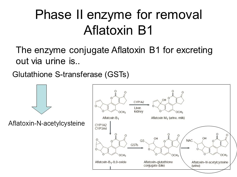 Phase II enzyme for removal Aflatoxin B1 The enzyme conjugate Aflatoxin B1 for excreting out via urine is..