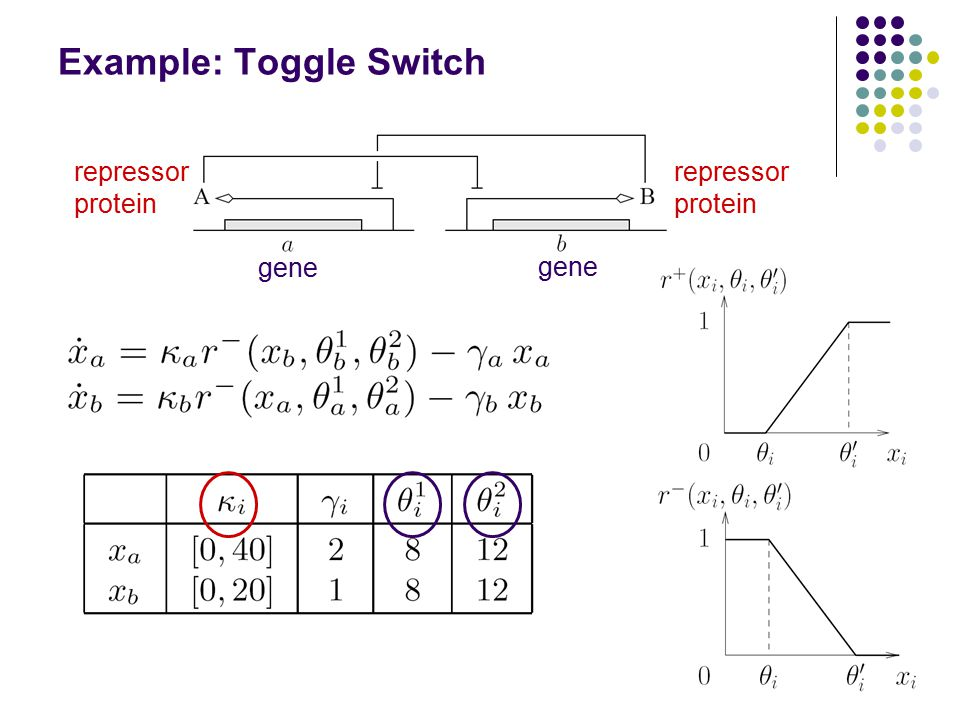 Example: Toggle Switch 32 affine expressions, only 4 non-constant ones Parameter space