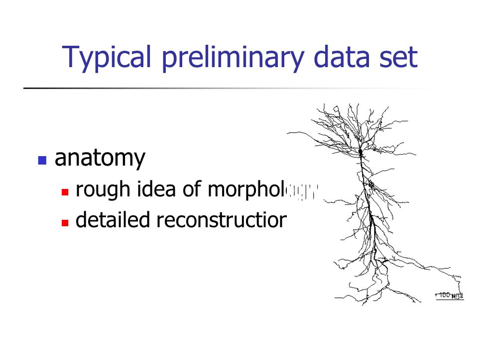 Typical preliminary data set anatomy rough idea of morphology detailed reconstruction