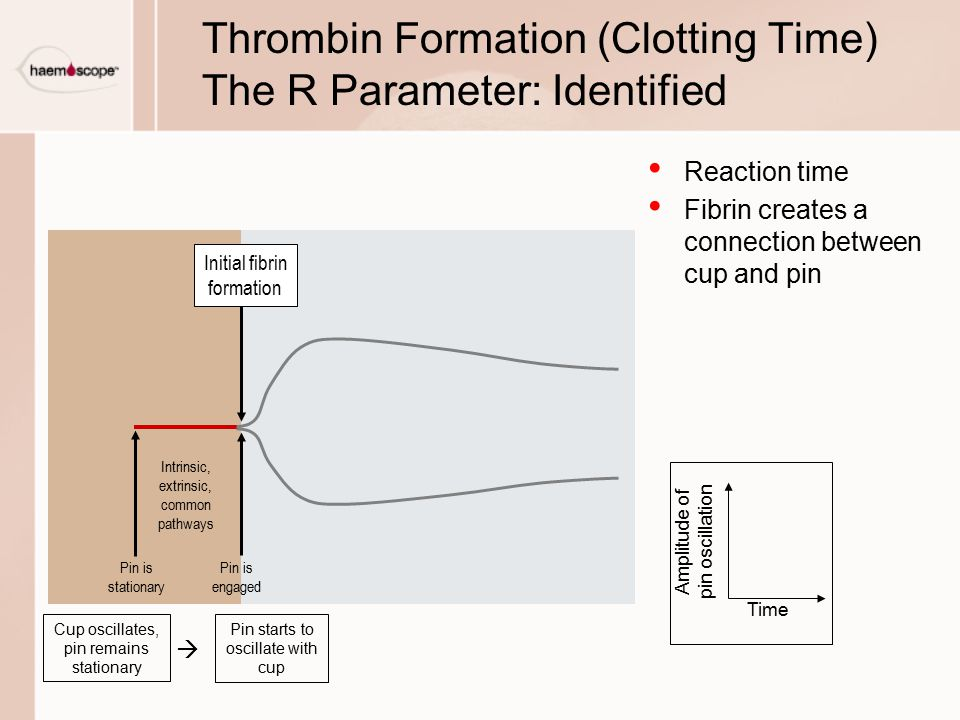 Thrombin Formation (Clotting Time) The R Parameter: Identified Reaction time Fibrin creates a connection between cup and pin Cup oscillates, pin remains stationary Time Amplitude of pin oscillation Pin starts to oscillate with cup  Pin is stationary Pin is engaged Intrinsic, extrinsic, common pathways Initial fibrin formation