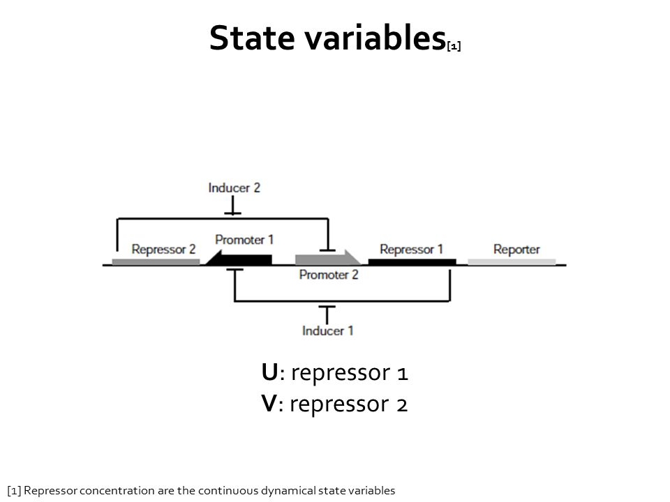 State variables [1] U: repressor 1 V: repressor 2 [1] Repressor concentration are the continuous dynamical state variables